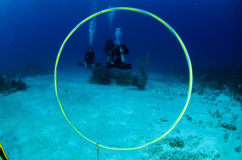 hover-buoyancy-hoop.jpg