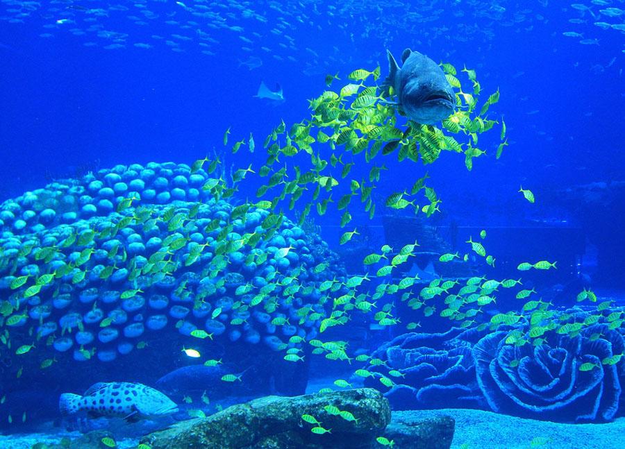 World's-Largest-Aquarium-on-Earth-15.jpg