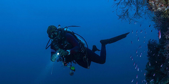 Four Tips to Choose a Dive Light