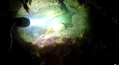 OrcaTorch D511 2200 Lumens Dive Light Test and Review