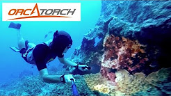 Scuba / Freedive flashlights - Orcatorch D550, D500, D500V